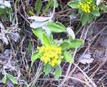041112_flower