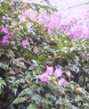041112_flower2