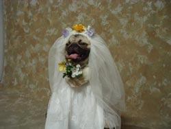 041112_wedding
