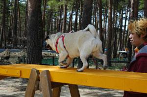 doggypark05