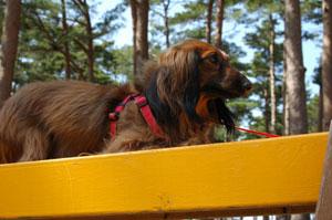 doggypark08