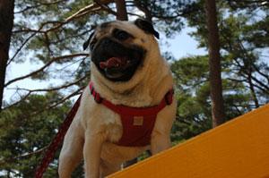 doggypark09