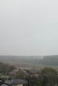 4月の桜と雪